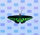Raja Brooke butterfly