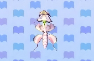 File:Orchid mantis encyclopedia (New Leaf).jpg