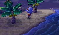 Goliath beetle island