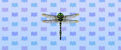 File:Banded dragonfly new leaf.png