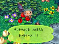 Ladybug (Animal Forest caught)