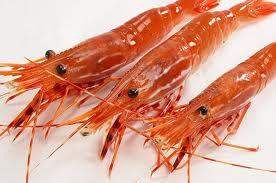 File:Real sweet shrimp.jpg