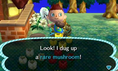 File:Rare mushroom.JPG
