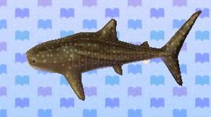 WhaleSharkNL
