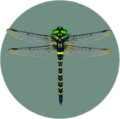 Banded Dragonfly (City Folk)