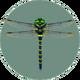 Banded Dragonfly (City Folk)