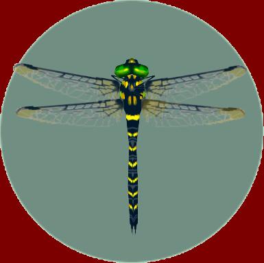 File:Banded Dragonfly (City Folk).png