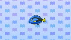 SurgeonfishNL