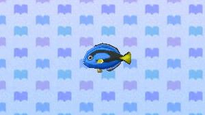 File:SurgeonfishNL.png