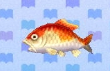 Koi encyclopedia (New Leaf)
