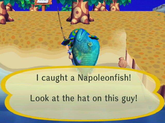 File:I CAUGHT A NAPOLEONFISH!!!.jpg