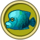 Napoleonfish (City Folk)