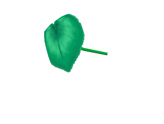File:Umbrella leaf umbrella.png
