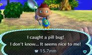 Pill bug new leaf
