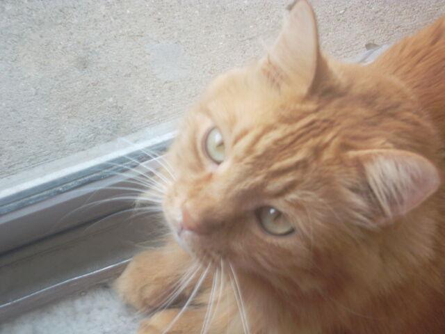 File:Cat 204.jpg