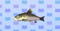 Barbel steed encyclopedia (New Leaf)