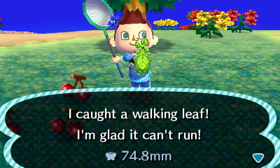 File:Walking leaf new leaf.JPG