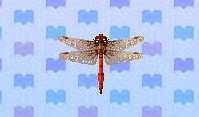 Red dragonfly encyclopedia (New Leaf)