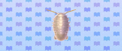 File:Giant isopod.png