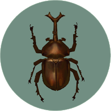 File:Dynastid Beetle (City Folk).png