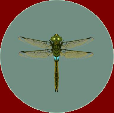 File:Darner Dragonfly (City Folk).png