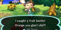 Fruit beetle