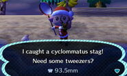 Cyclommatus caught