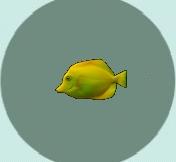 File:YellowTang.jpg