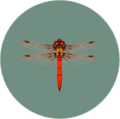 Red Dragonfly (City Folk)