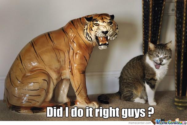 File:Close-enough-kitty-cat-close-enough o 2083787.jpg