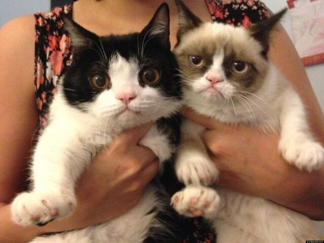 File:O-GRUMPY-CATS-BROTHER-POKEY-facebook.jpg