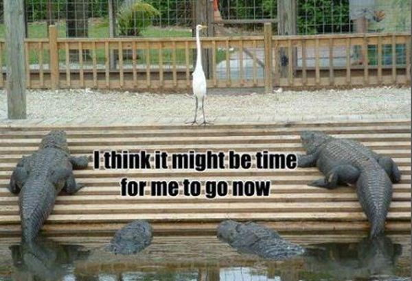 File:Funny-animal-captions-005-002.jpg