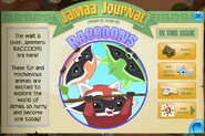 Raccoons in jamaa journal