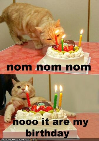File:Funny-pictures-cat-wants-his-birthday-cake.jpg