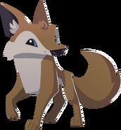 Coyote transparent