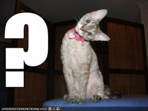 File:CatQuestion.jpg
