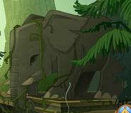 Asian elephant0028