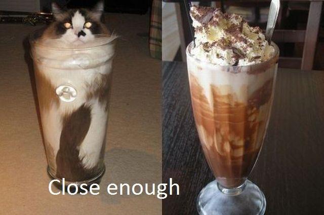 File:Coffee-shake-cat.jpg