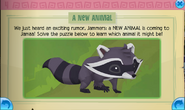 New Animal - Raccoon Solved