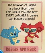 Koalas are back