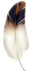 File:Brown and White Feather Clipart.png