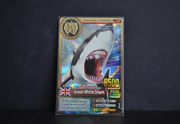 File:Great white sharks.jpg