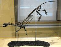 Puijila darwini skeleton