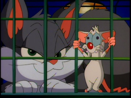 File:Trapped rat.jpg