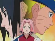 Sakura determination