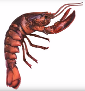 Lobster from animorphs 5 the predator