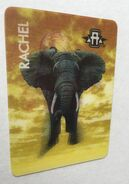 Elephant morph card (rachel)