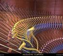 Acoustic Curves
