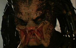 Predator face2
