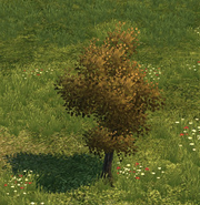 Tree big